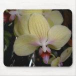 Orquídea Tapete De Ratones