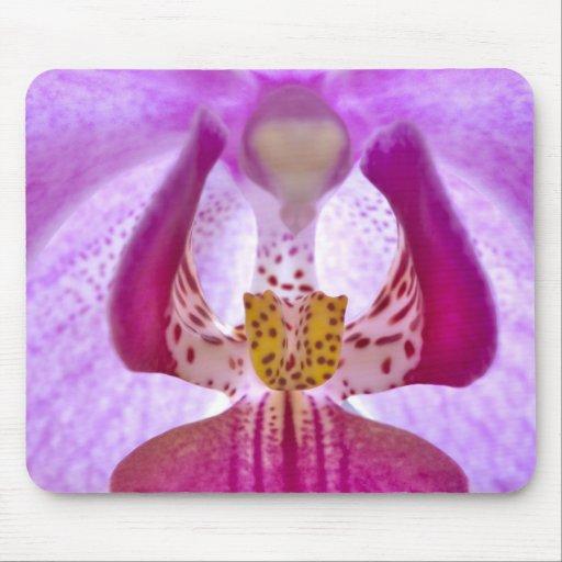Orquídea Tapetes De Raton