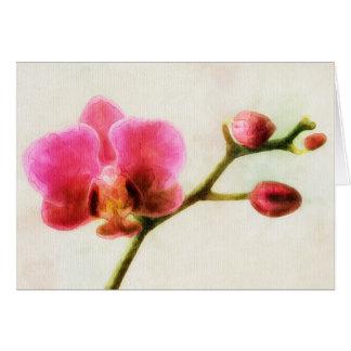 Orquídea Tarjetas