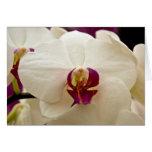 Orquídea • Tarjeta de felicitación