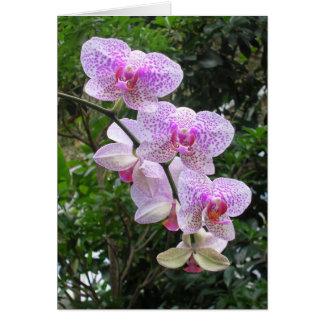 Orquídea Tarjeta De Felicitación