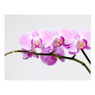orquídea postales