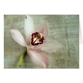 Orquídea Tarjeton