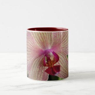 Orquídea Taza Dos Tonos