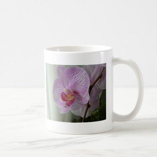 Orquídea Tazas De Café