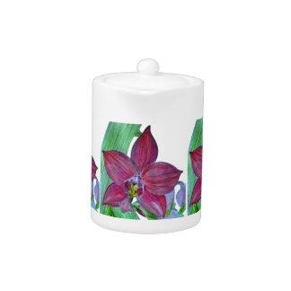 Orquídea terrestre