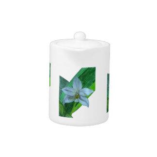 Orquídea terrestre blanca