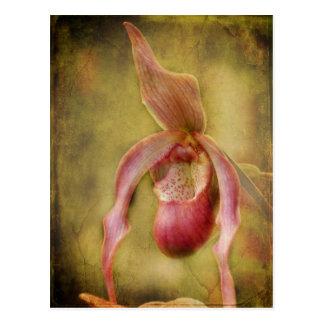 Orquídea texturizada de señora deslizador tarjeta postal