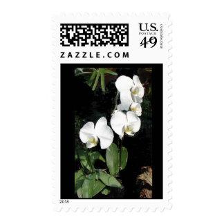 Orquídea Timbres Postales