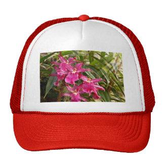 Orquídea - una sorpresa agradable gorras de camionero