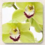 Orquídea verde fresca - aislada en blanco posavasos