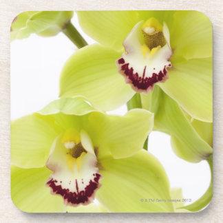 Orquídea verde fresca - aislada en blanco posavasos de bebida