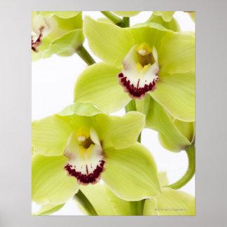 Orquídea verde fresca - aislada en blanco póster