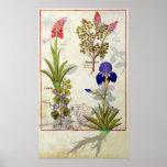 Orquídea y Fumitory o Hedera y iris del corazón sa Póster