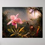 Orquídea y tres colibríes brasileños poster