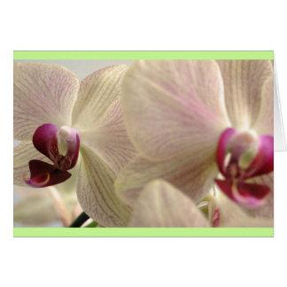 Orquídeas #1 tarjetón