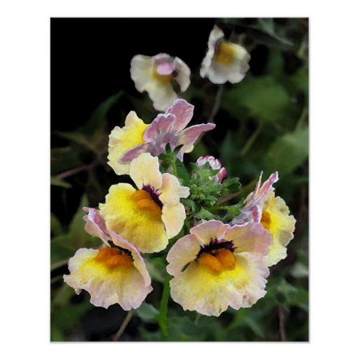 Orquídeas amarillas poster