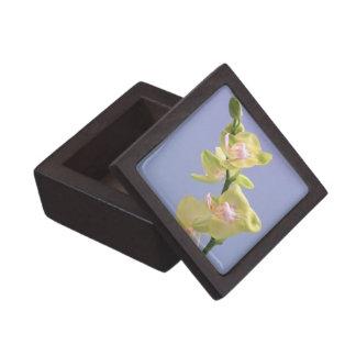 Orquídeas amarillas y rosadas en la caja de regalo caja de joyas de calidad