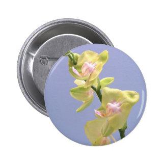 Orquídeas amarillas y rosadas en la lavanda pins