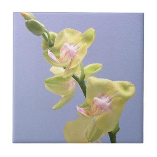 Orquídeas amarillas y rosadas en la teja de la lav