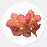 Orquídeas anaranjadas manchadas pegatina redonda