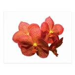 Orquídeas anaranjadas manchadas postales
