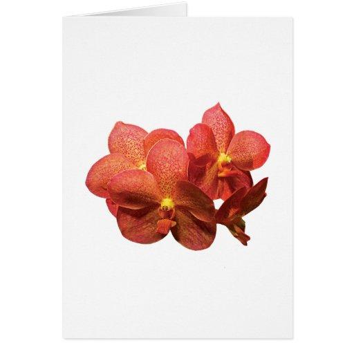 Orquídeas anaranjadas manchadas tarjeta de felicitación