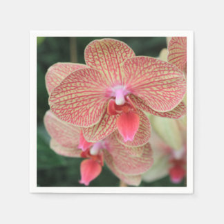 Orquídeas anaranjadas servilleta desechable