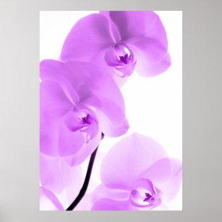 Orquídeas arte