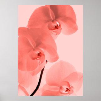 Orquídeas arte Rojo