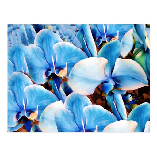 Orquídeas azules de Love_ Tarjeta Postal