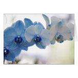 Orquídeas azules felicitación