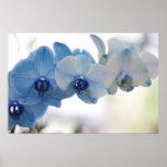 Orquídeas azules impresiones