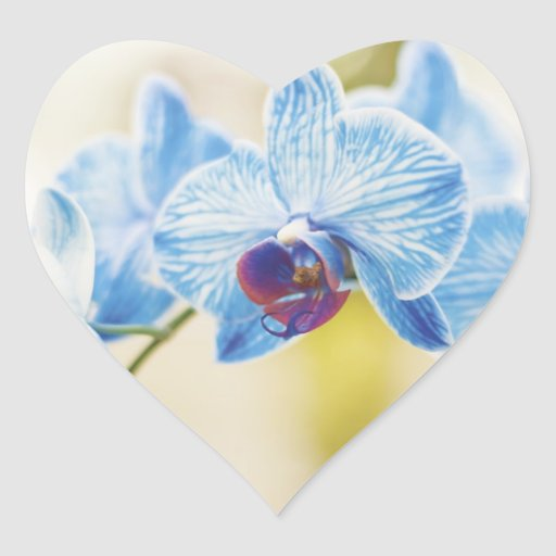 Orquídeas azules pegatina en forma de corazón