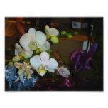 Orquídeas blancas arte fotográfico