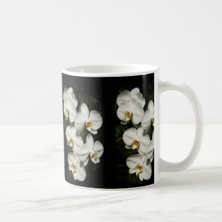 Orquídeas blancas del phalaenopsis taza básica blanca