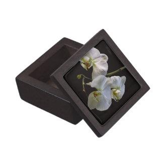 Orquídeas blancas elegantes en negro caja de joyas de calidad