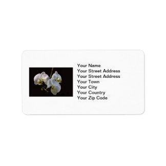 Orquídeas blancas elegantes en negro etiqueta de dirección