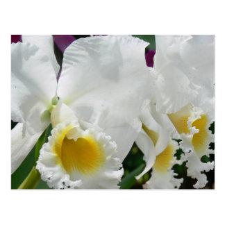 Orquídeas blancas en la postal de Tailandia