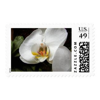 Orquídeas blancas estampillas