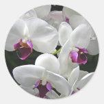 Orquídeas blancas etiquetas redondas