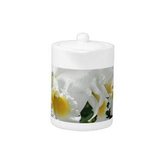 Orquídeas blancas hermosas en pote del té de