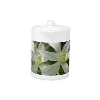 Orquídeas blancas I