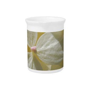 Orquídeas blancas jarra