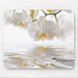 Orquídeas blancas Mousepad