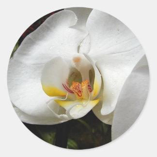 Orquídeas blancas pegatina redonda