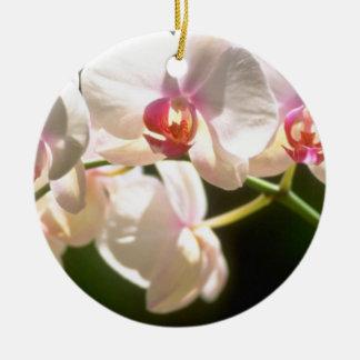 orquídeas blancas, plantación de la perspectiva, adorno redondo de cerámica