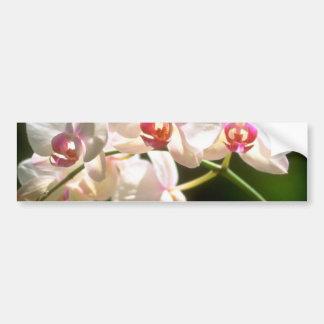 orquídeas blancas, plantación de la perspectiva, f pegatina para auto