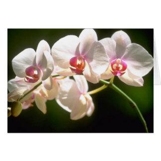 orquídeas blancas, plantación de la perspectiva, f tarjeta de felicitación