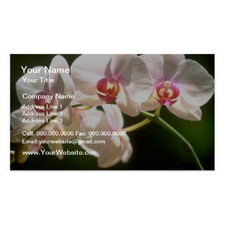 orquídeas blancas, plantación de la perspectiva, f tarjetas de visita